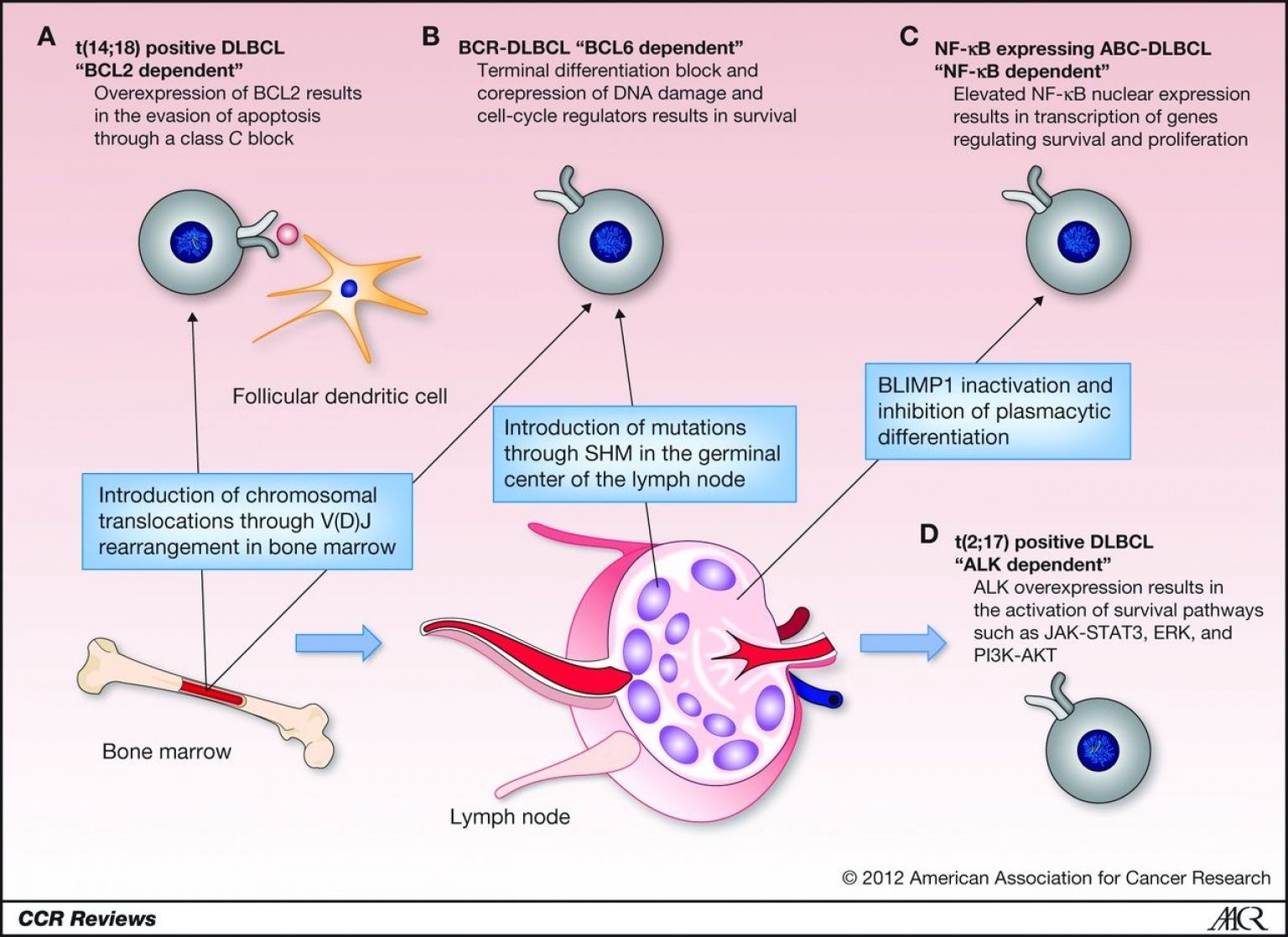 medium resolution of d cell lymphoma check more at http www nhprimecare org