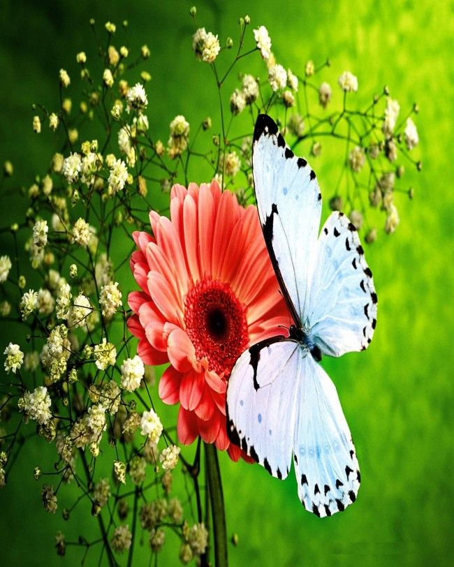 Pin By Maf04 On Butterflies Beautiful Flowers Wallpapers