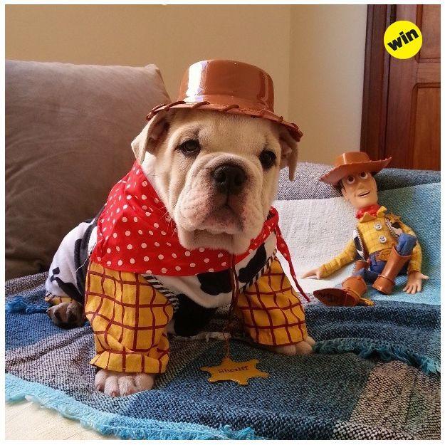 Cool Bulldog Canine Adorable Dog - 7430c95a4e5d95e5f6e1913709242a63  Snapshot_372096  .jpg