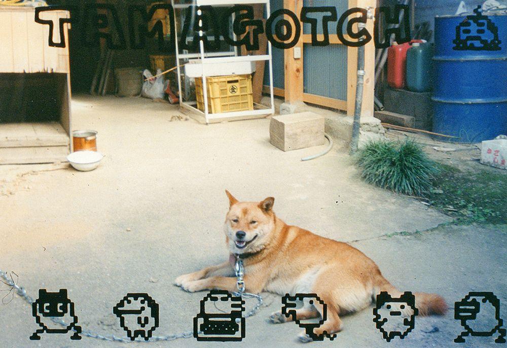 亡くなった犬と今いる犬 違いがおもしろくて愛おしい Inubot回覧板 Esseonline エッセ オンライン 犬 ペット 柴犬