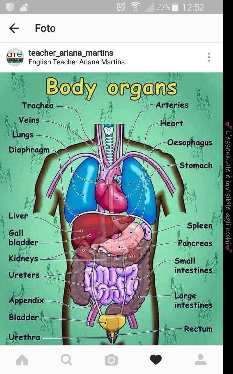 Body Salud Dietavegetarianaadelgazar Govorim Na Anglijskoj Bez Problem Vocabulario En Ingles Palabras Inglesas Frases Comunes En Ingles
