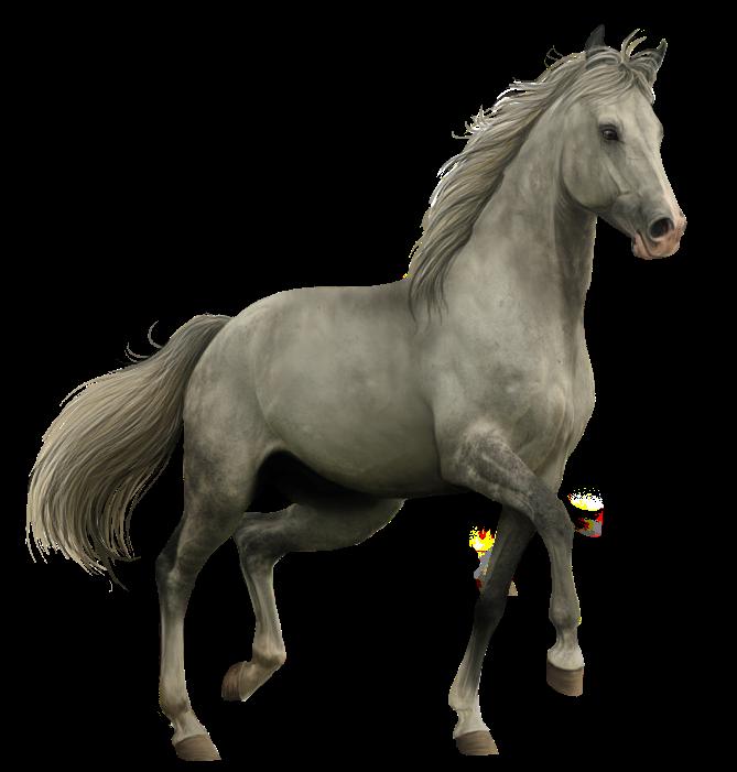 Horse Cartoon Clip Art Horse Png Horse Clipart Transparent Horses Horse Cartoon Horse Background