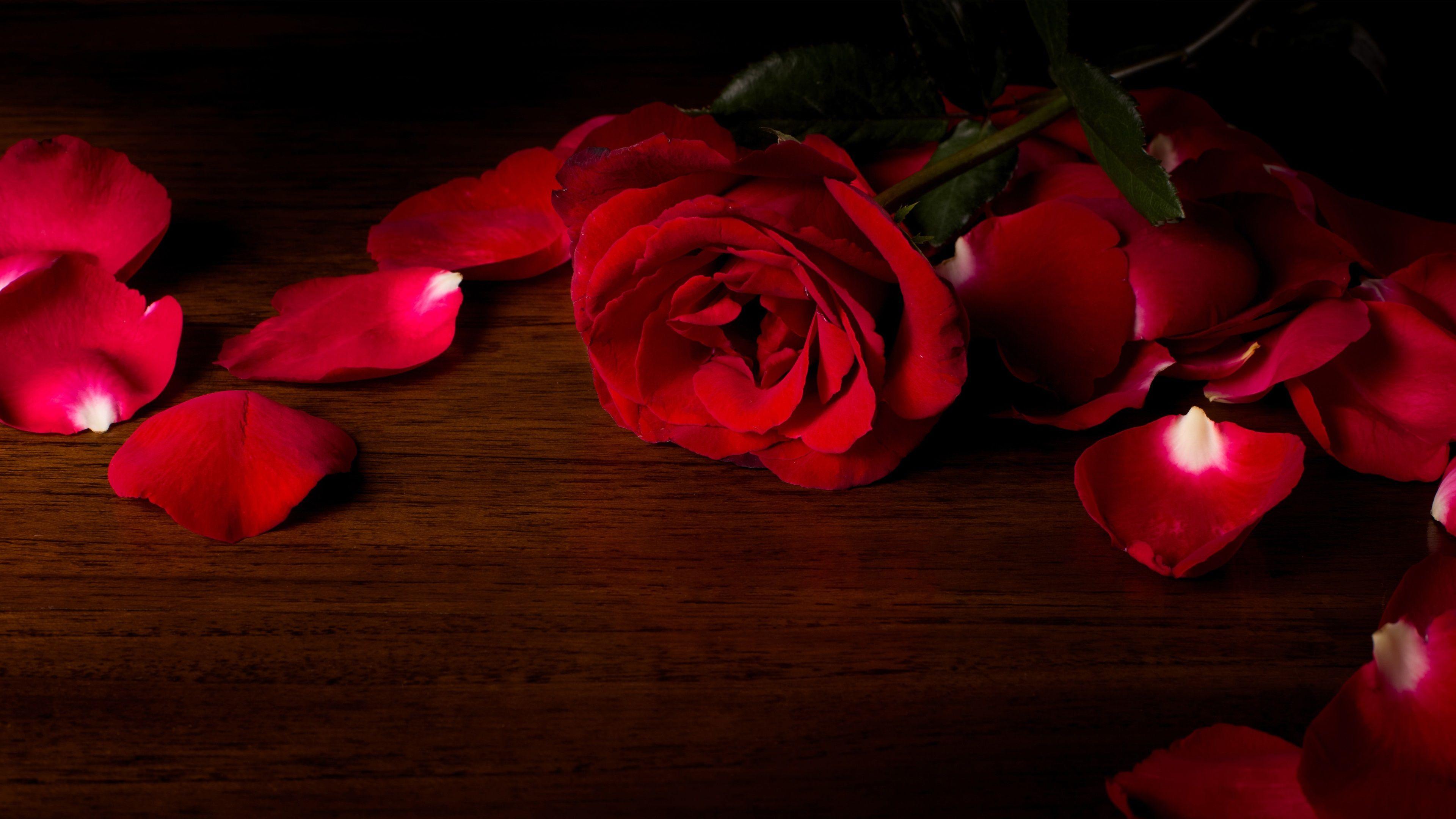 3840x2160 Red Roses 4k Image Background Red Roses Wallpaper Rose Wallpaper Red Roses