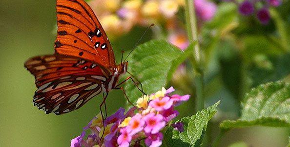 Florida Native and Uncommon Plants