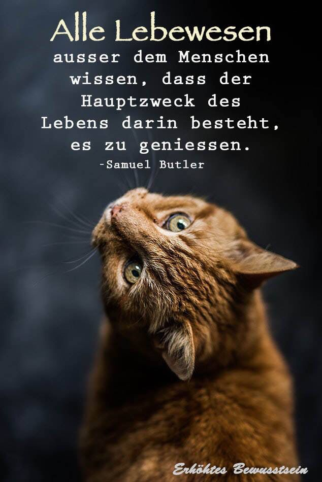 #life #thoughts #sprüche #cats