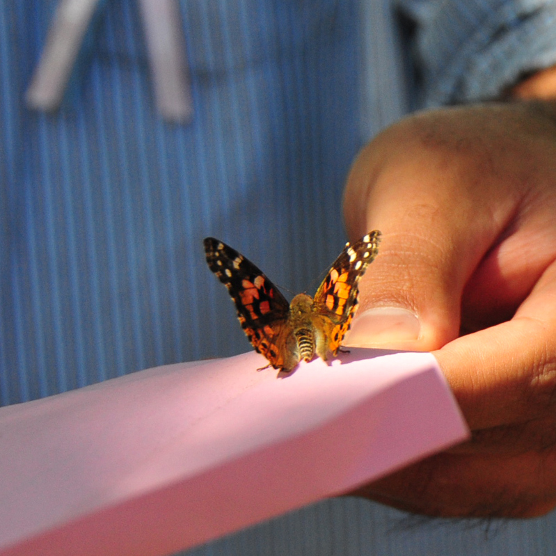 Live Butterfly Release Memorial Packages A Butterfly