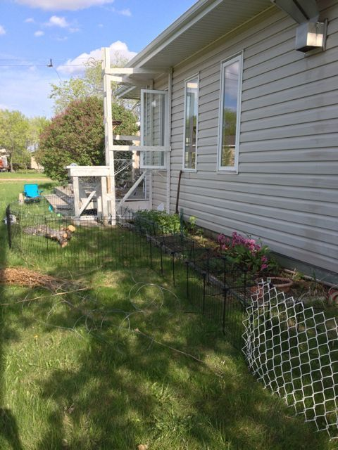 Our New Cat Run Part 1 Pet Enclosure 24 Quot Tall From Amazon Tunnel Of Canadian Tire Wire Cube