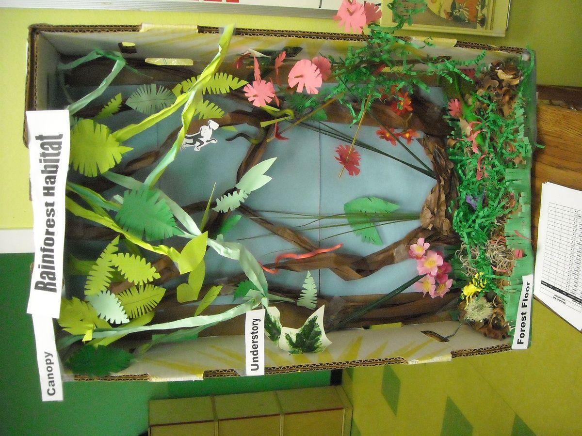 Shoebox Diorama | rainforest habitat diorama image search results ...