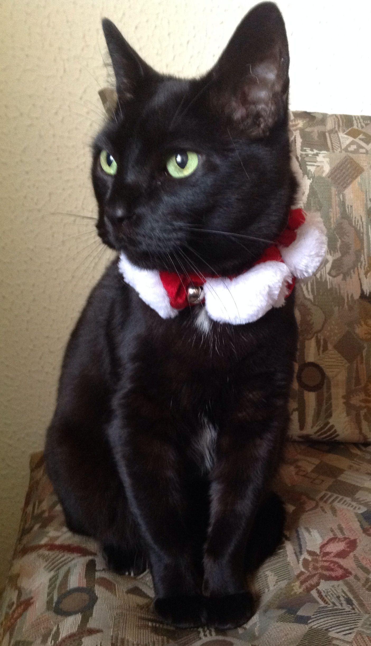 Lucas de Navidad....
