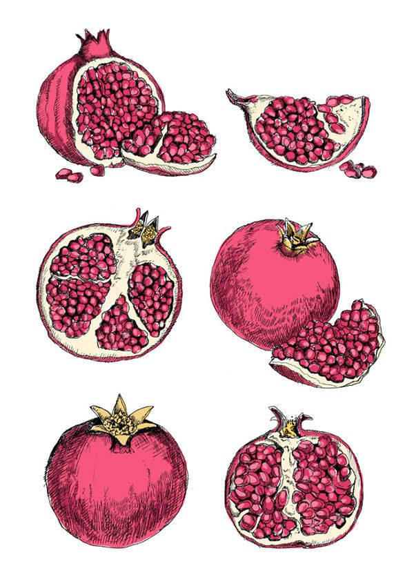 Drawings By May Van Millingen Design Hunter Pomegranate Art Pomegranate Tattoo Pomegranate Drawing