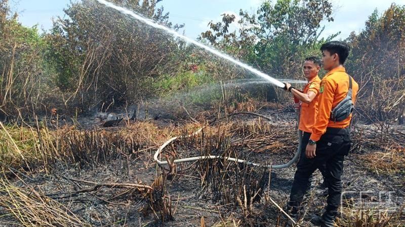 70 Hektare Kawasan Taman Hutan Raya Di Jambi Terbakar Hutan