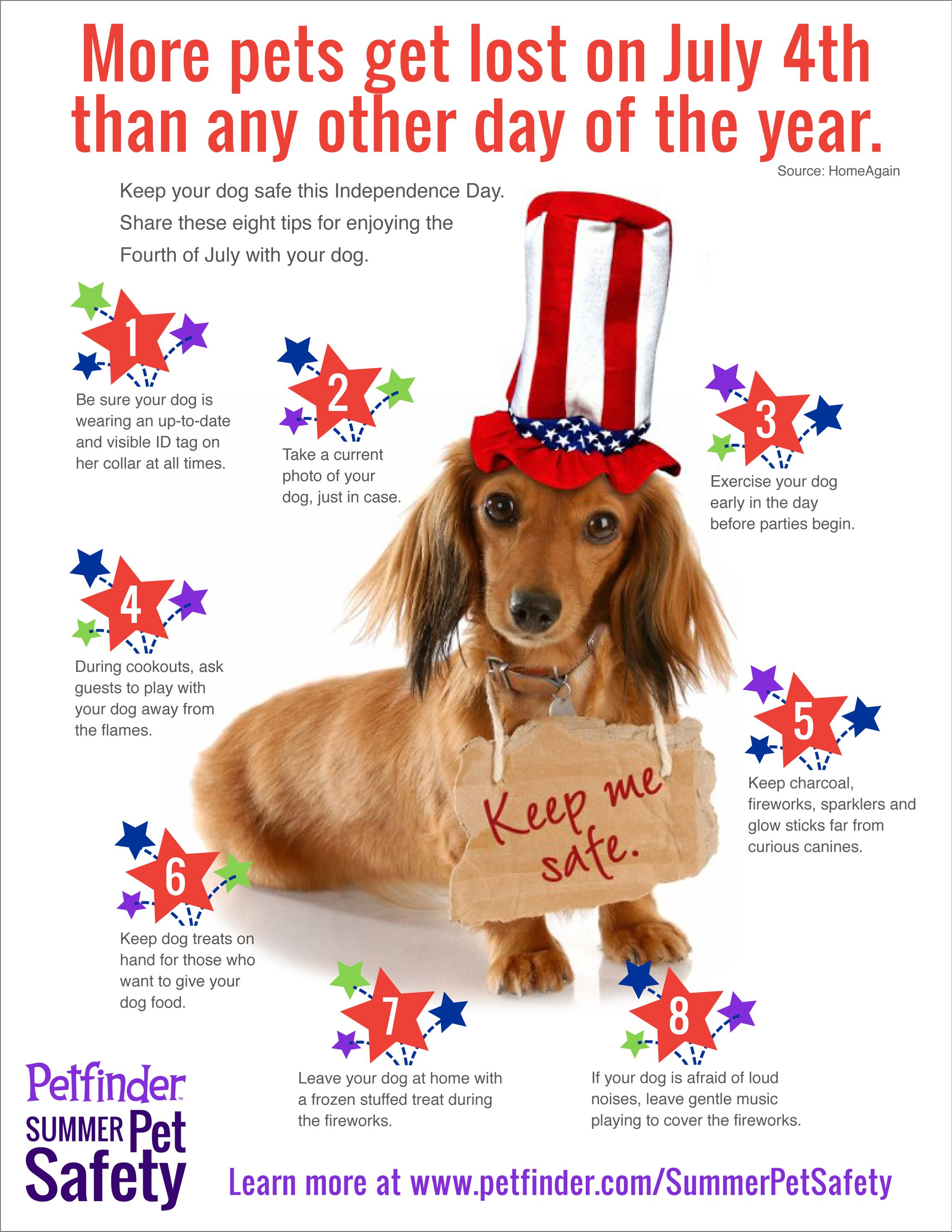 July 4 Can Be A Lot Of Fun But It Can Also Bring A Lot Of Dangers For Pets More Dogs And Cats Get Lost On July 4 Than Any Oth