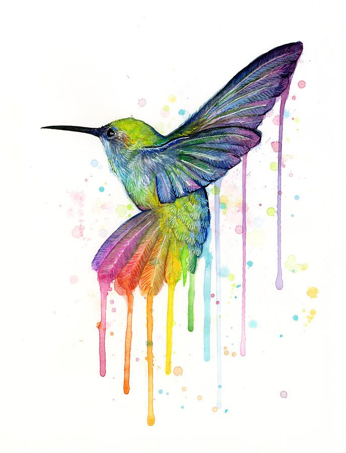 Hummingbird Of Watercolor Rainbow By Olga Shvartsur Hummingbird