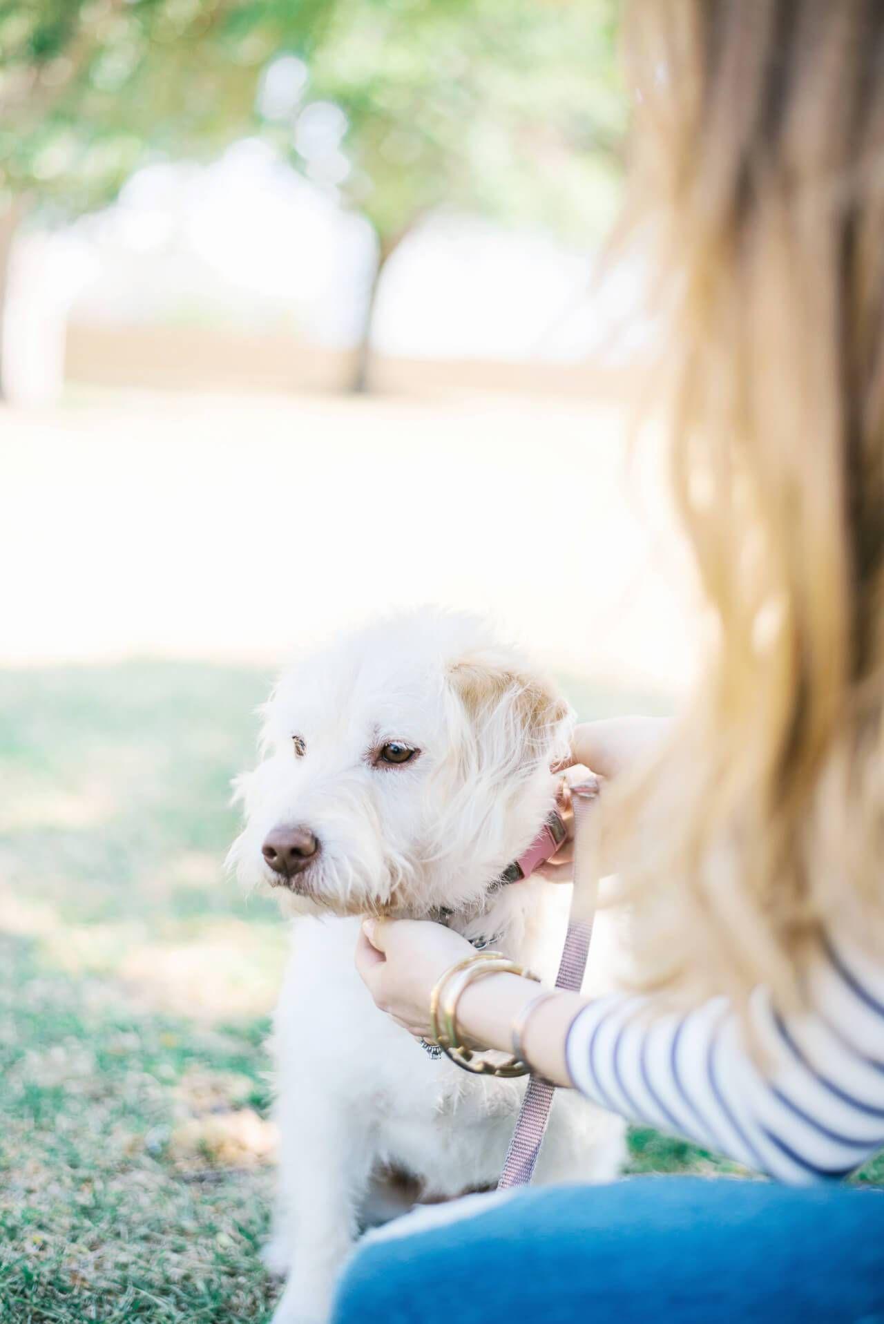 Ginger, a terrier retriever mix dog