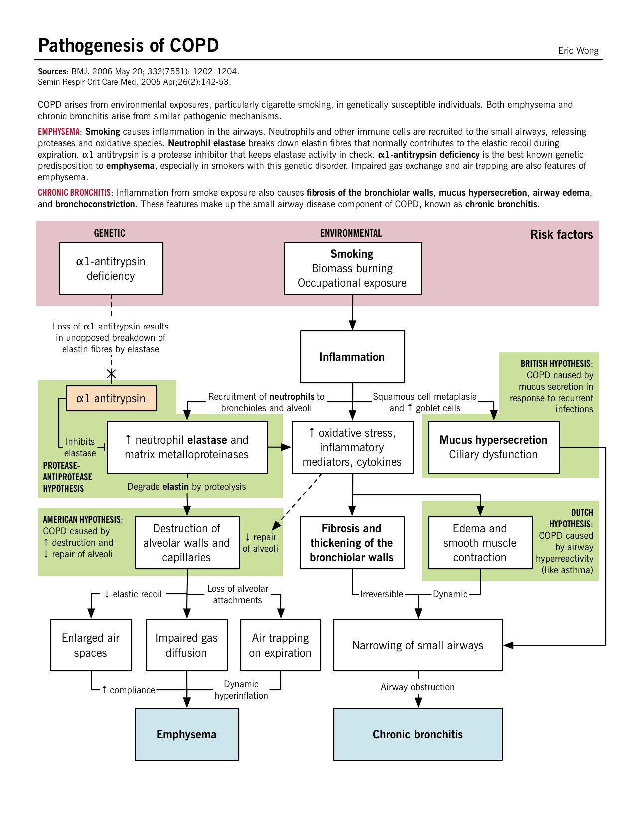 Pathogenesis of COPD | McMaster Pathophysiology Review ...