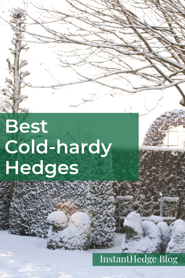 Most Cold Hardy Hedges Hedges Shrubs For Privacy Hedging Plants