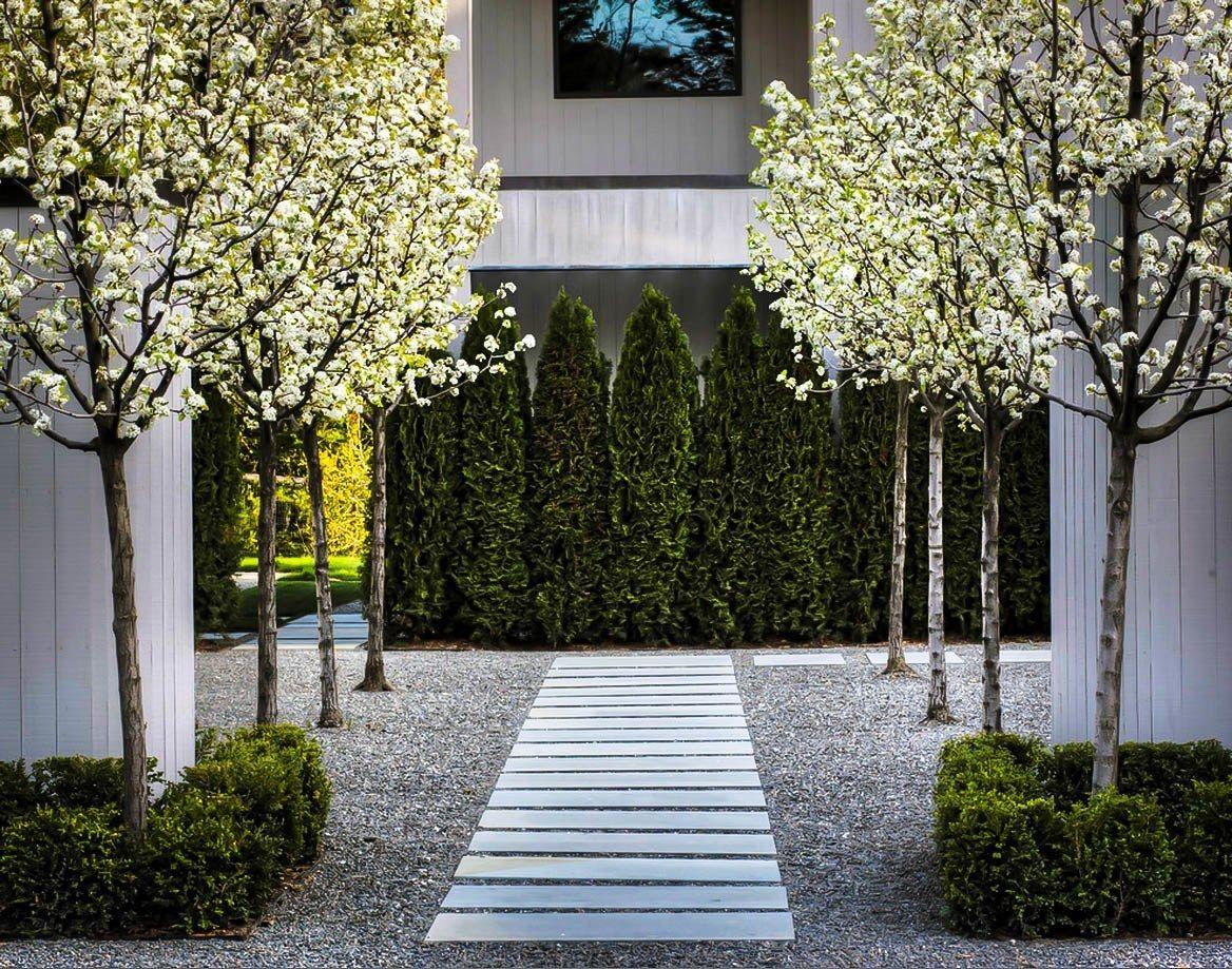 Emerald Green Arborvitae Walkway Landscaping Modern Landscaping Front Yard Landscaping