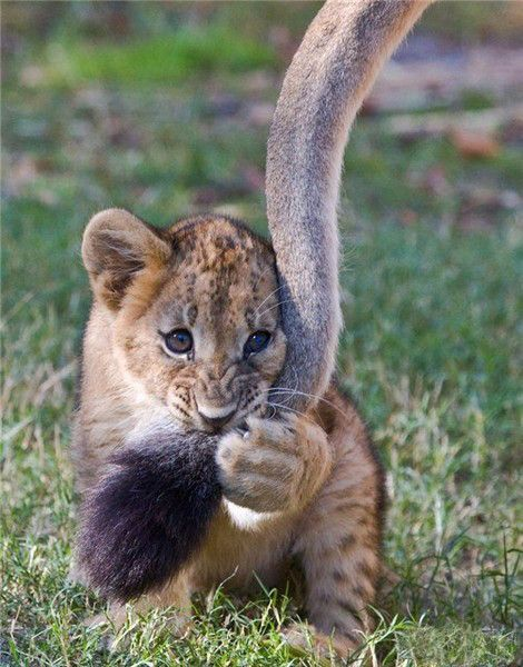 картинка Кошки | Товары для животных, Животные, Детеныши ...