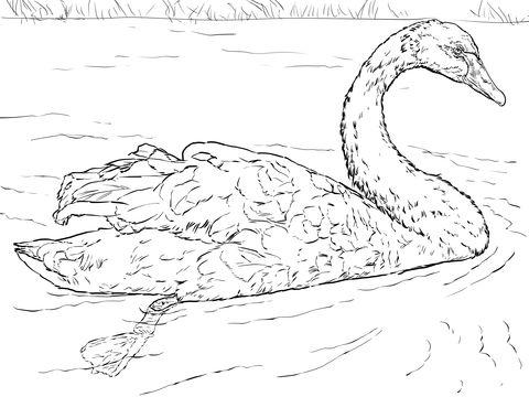 Black Swan Coloring Page