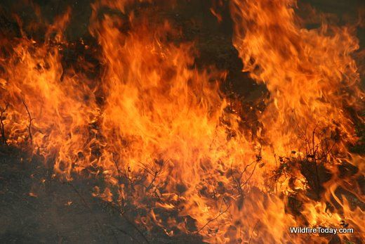 The flash point, or the temperature at which wood will burst into flame, is 572°F, according to HowStuffWorks.
