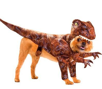 Dog Dressed Like A Velociraptor Dog Costumes Funny Pet Costumes