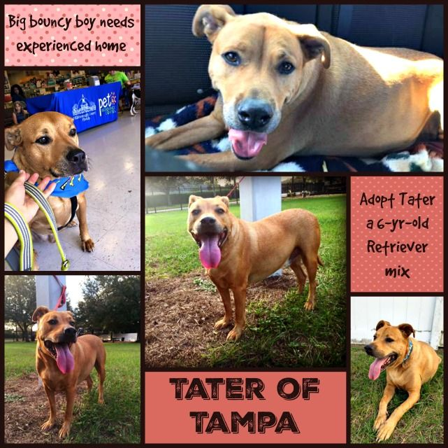 Tampa Fl 10 23 Update Still With The Adopters Re Urgent Youcaring For Boarding For Tater Re Urgent 10 1 17 Tater In Danger Again Rescue Needed Before 10 6 Adoption Foster Dog Cat Play Area