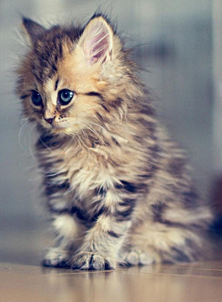 21411844 28a4 4a71 895e 5d8c50c547eb Kittens Cutest Cute