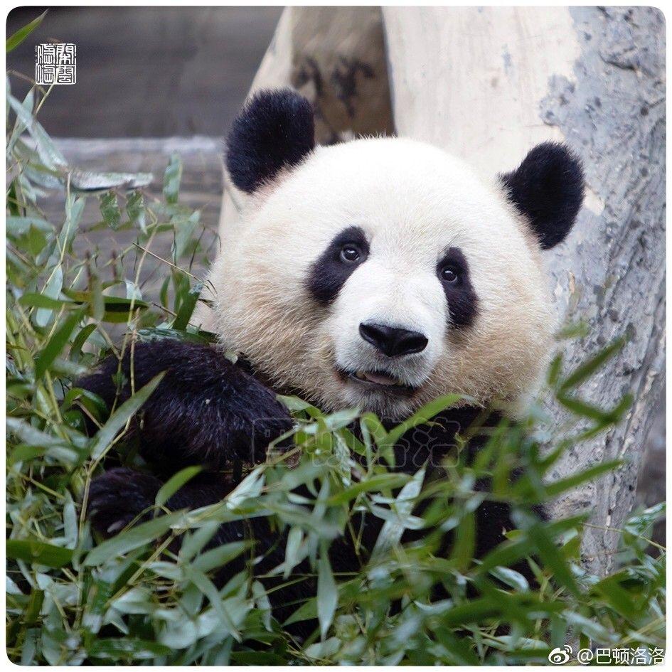 Pin De Adriw Seven Em Bears Urso