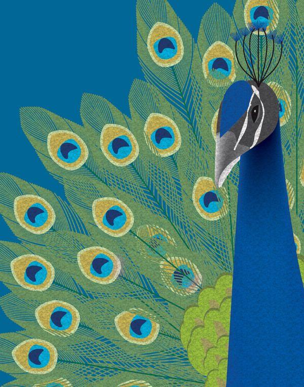peacock illustration - Szukaj w Google