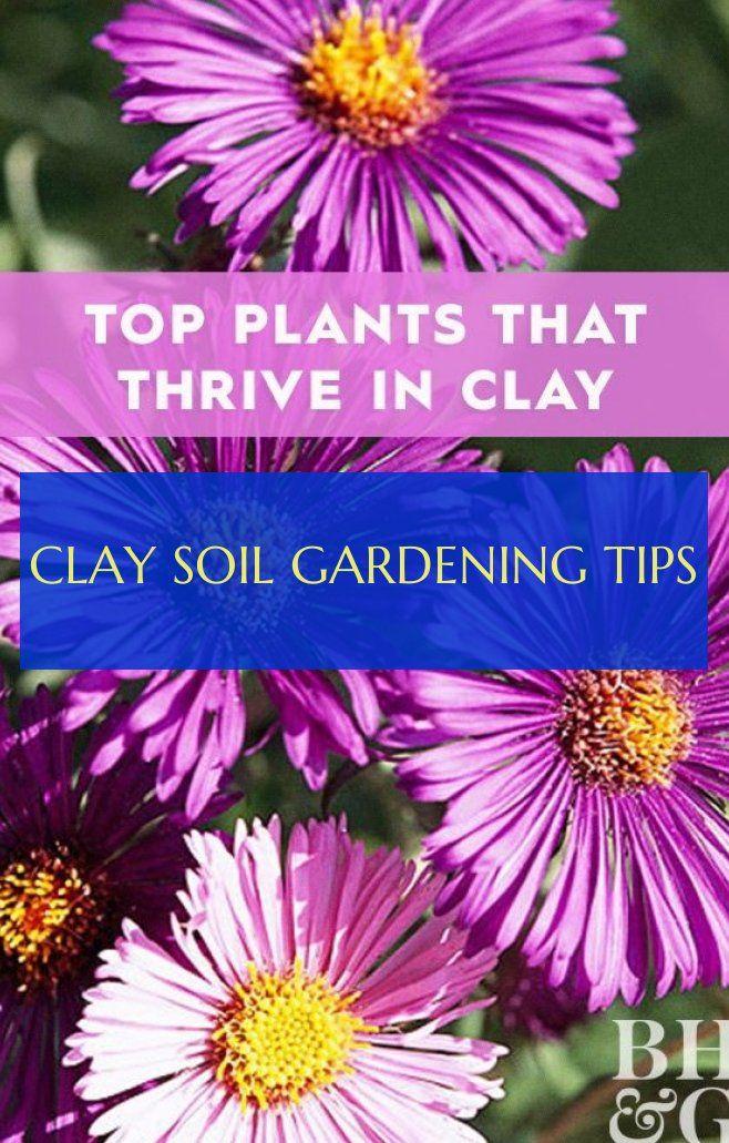 Clay Soil Gardening Tips clay soil gardening tips ,