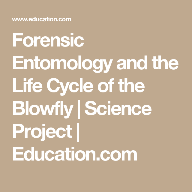 Forensic Entomology And The Life Cycle Of The Blowfly