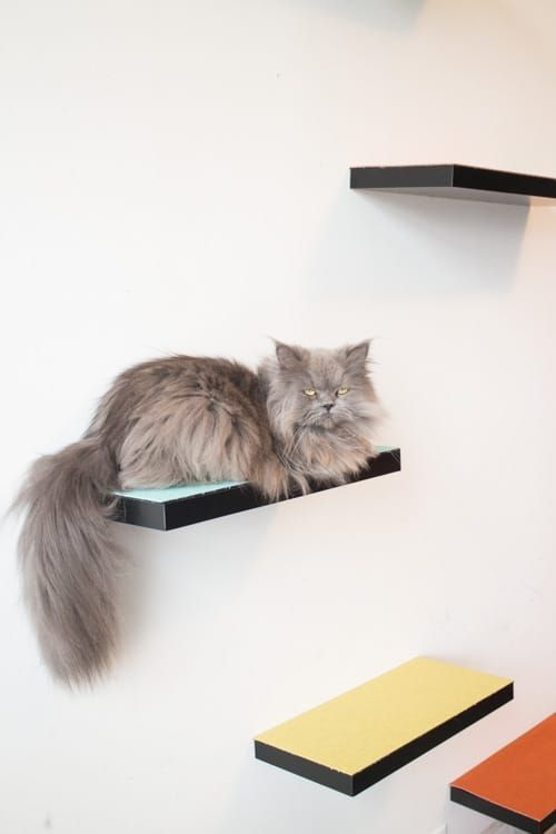 how to build cat shelves that your cat will love cat shelves easy rh pinterest com  do it yourself cat wall shelves