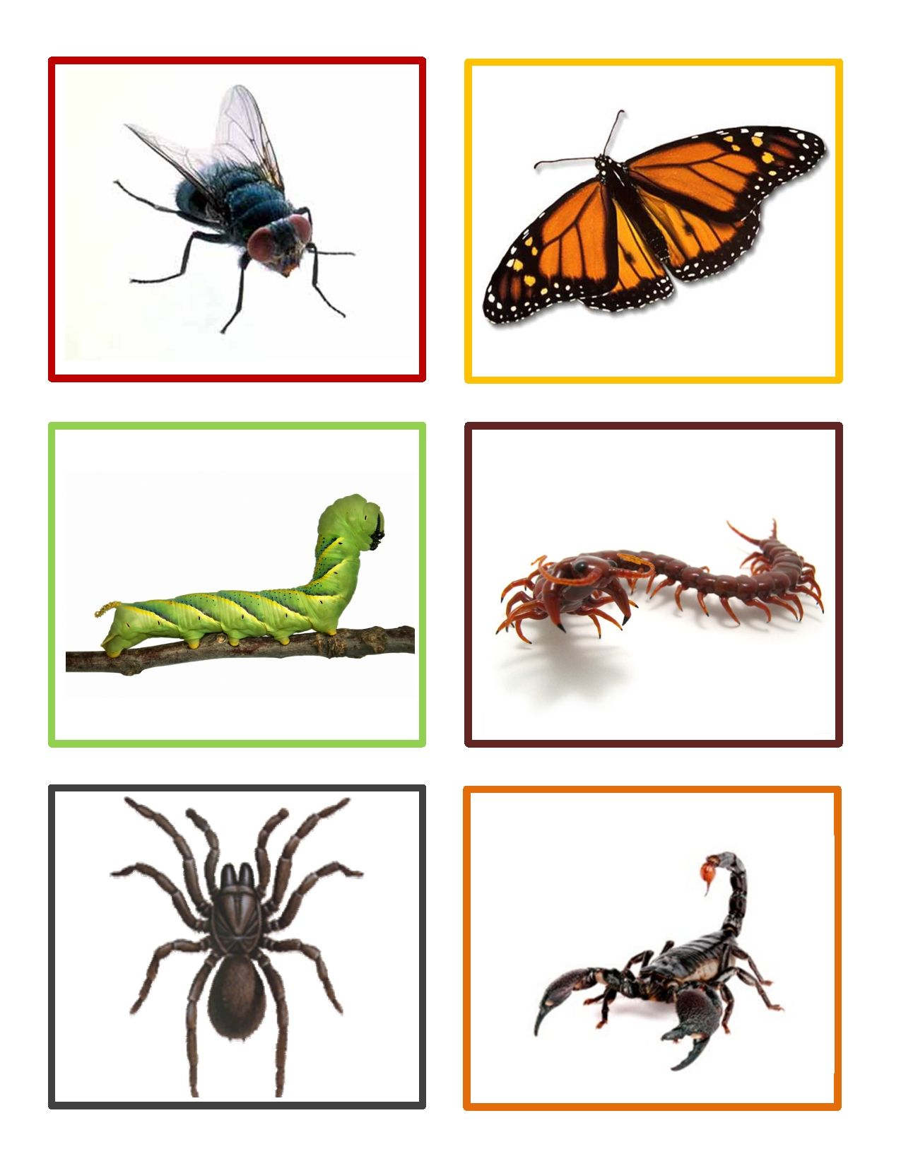 Insect Memory Game Is A Fun Activity For Preschoolers To