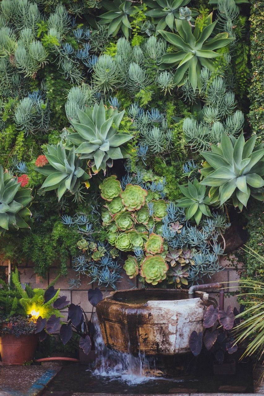 amazing living wall display of succulents source garden design by carolyn mullet - Garden Design By Carolyn Mullet