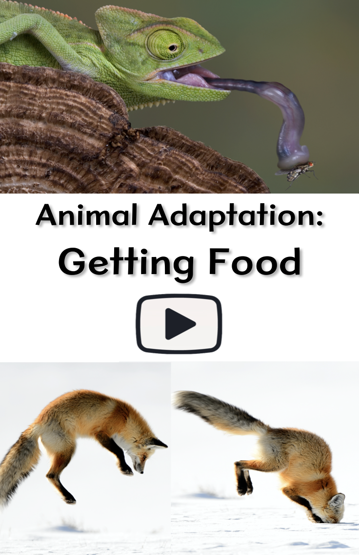Animal Adaptation Getting Food Animal Adaptations Life Science
