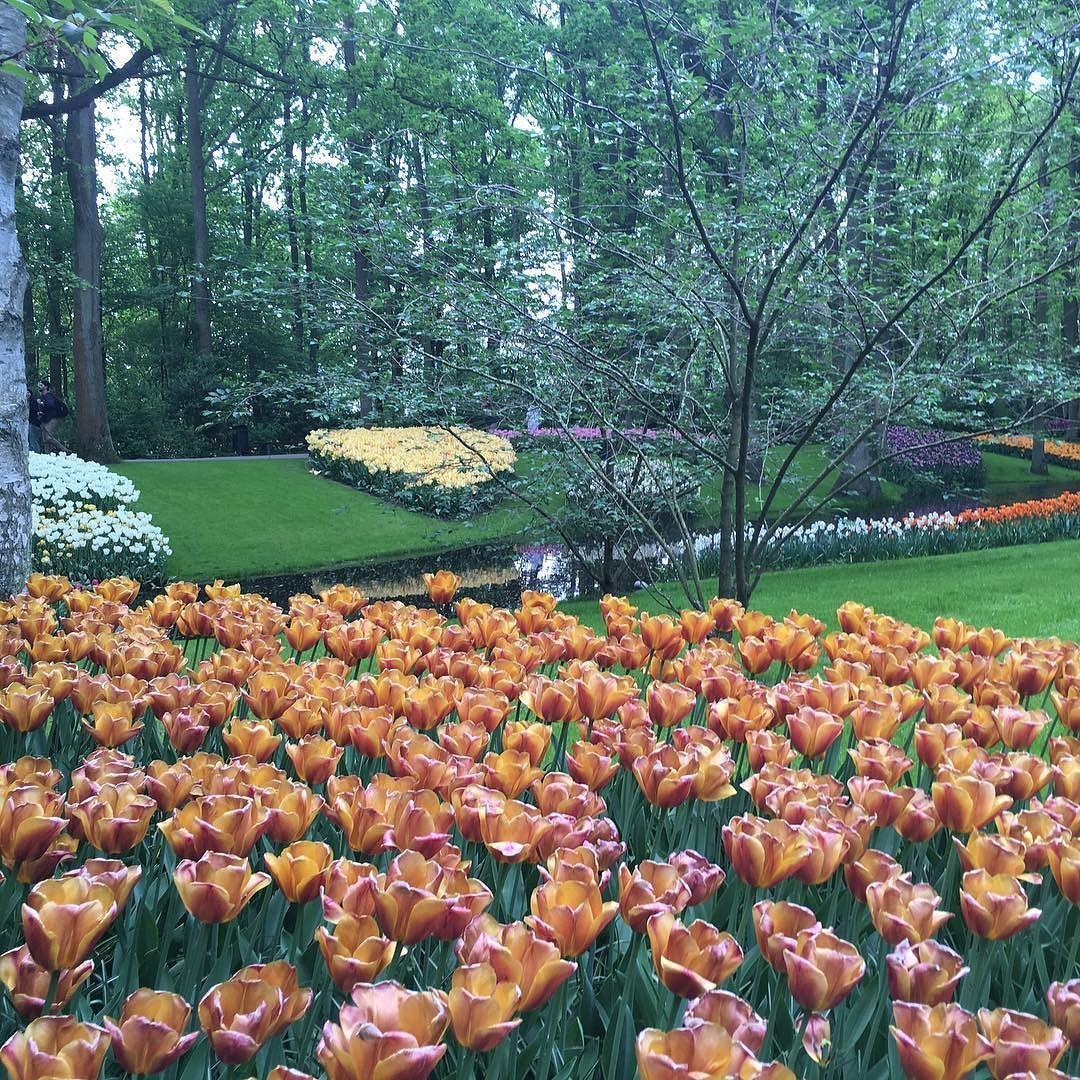 Keukenhof só fica aberto durante oito semanas no ano e recebe neste período cerca de 1 milhão de visitantes... As flores e cores do local são maravilhosas... by praondevaiagora
