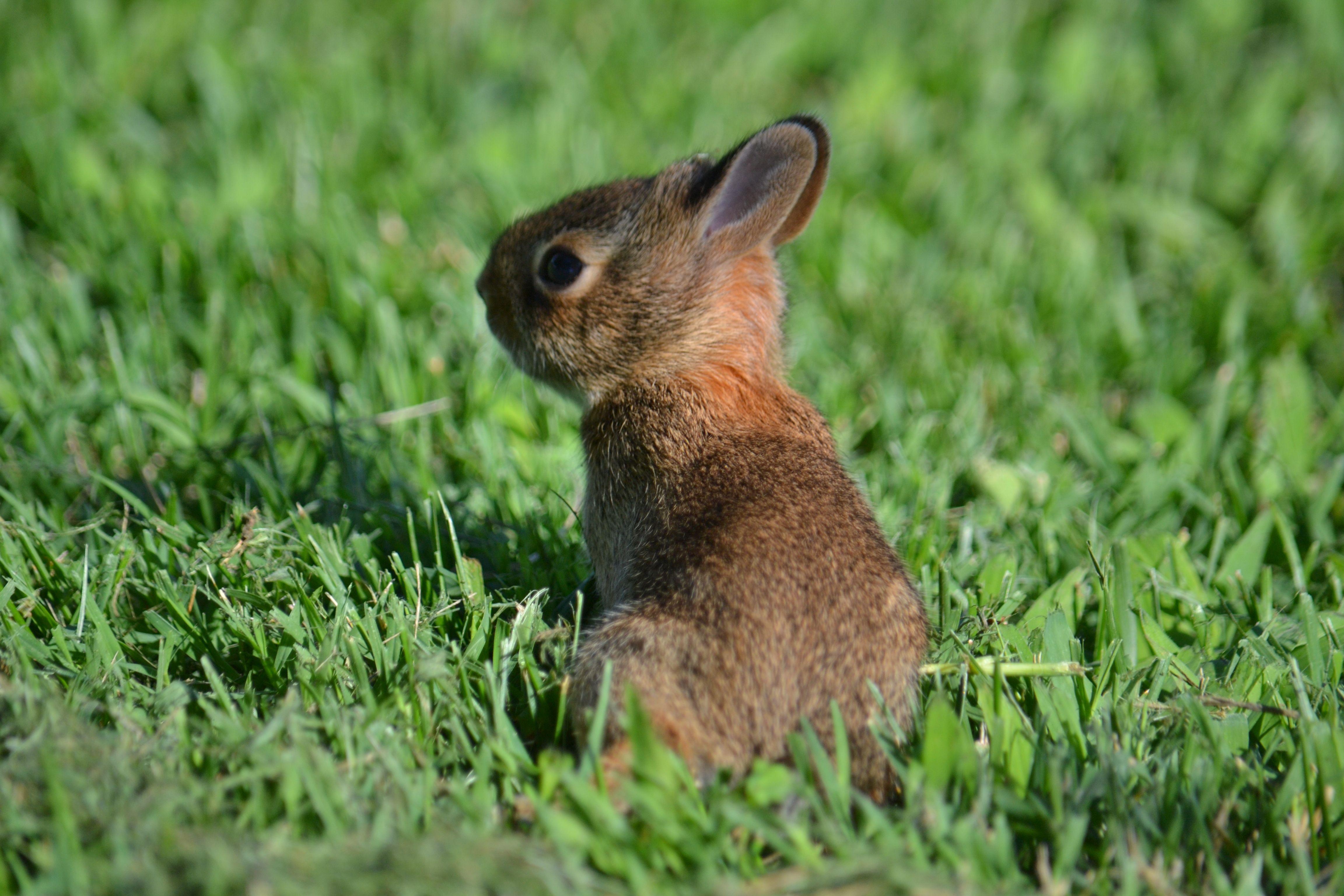 #LeahMariePhotography #baby #bunny #summer #noedits #adorable