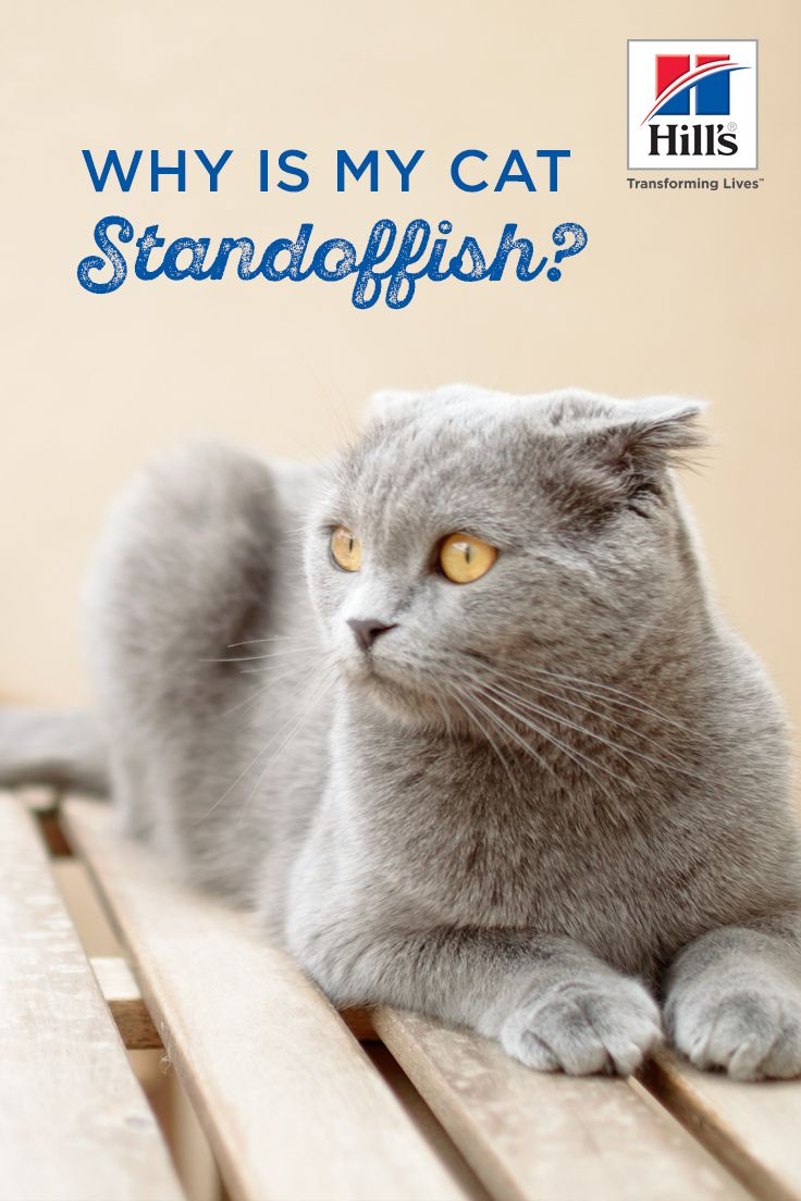 what does standoffish mean