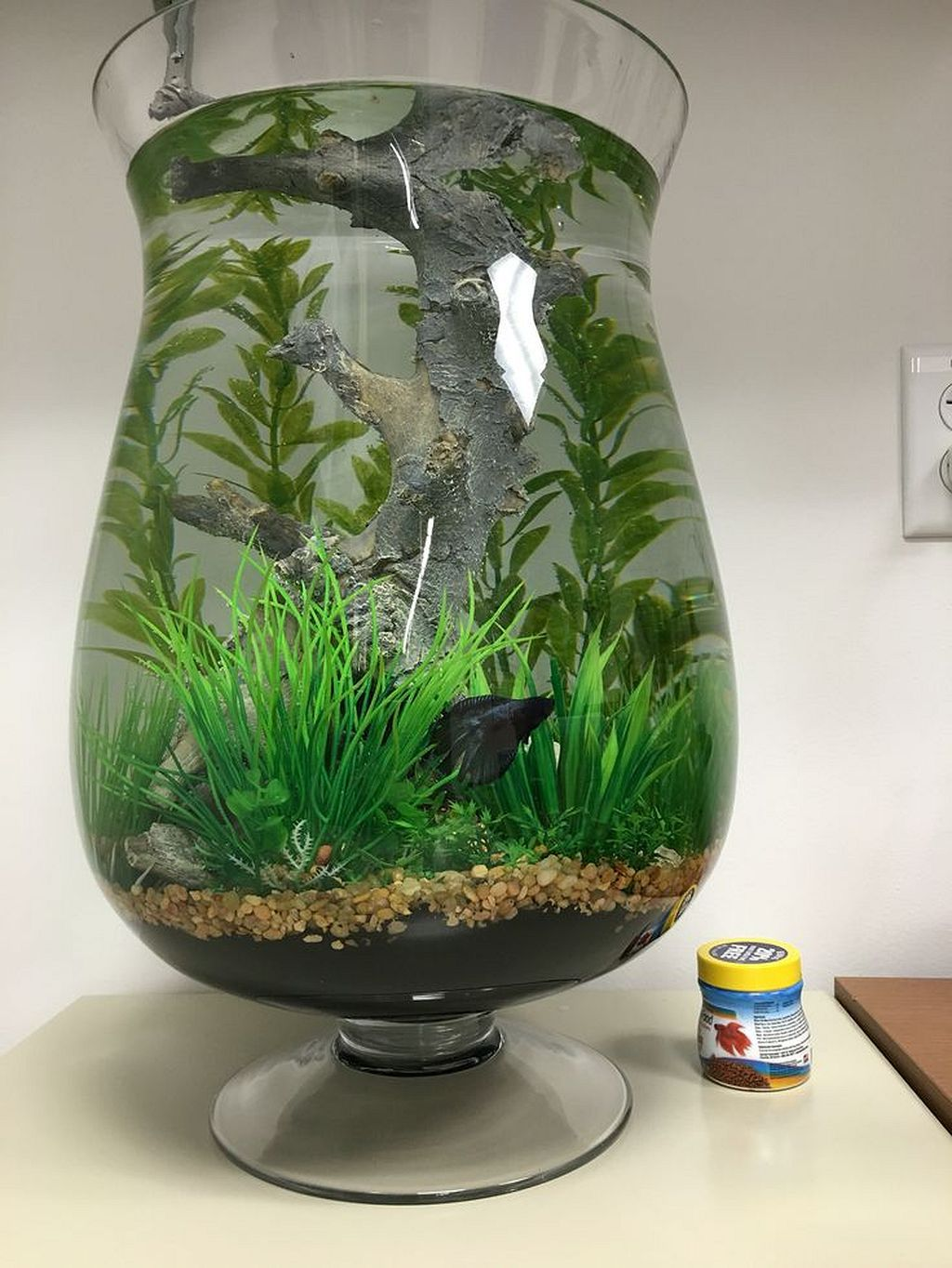 Gorgeous 30 awesome fish tank ideas https gardenmagz for Caring for a betta fish in a bowl