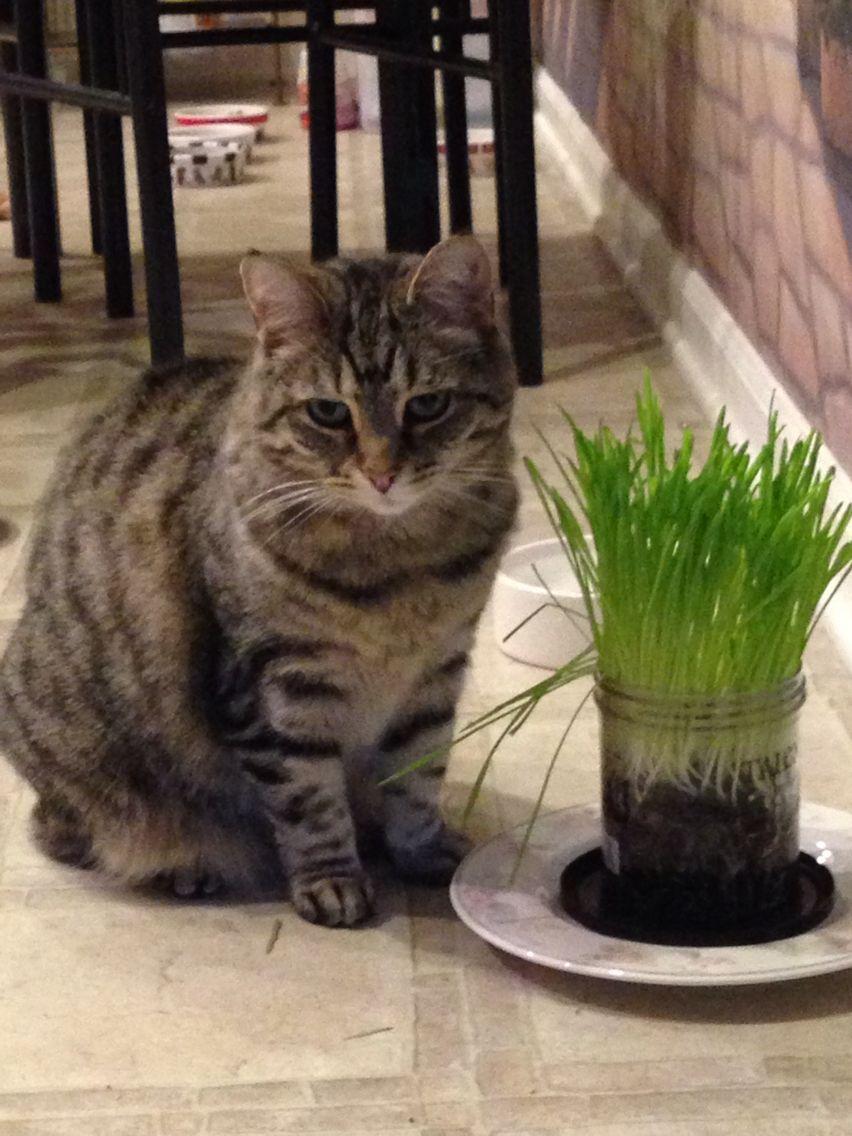 Cat Grass Lover