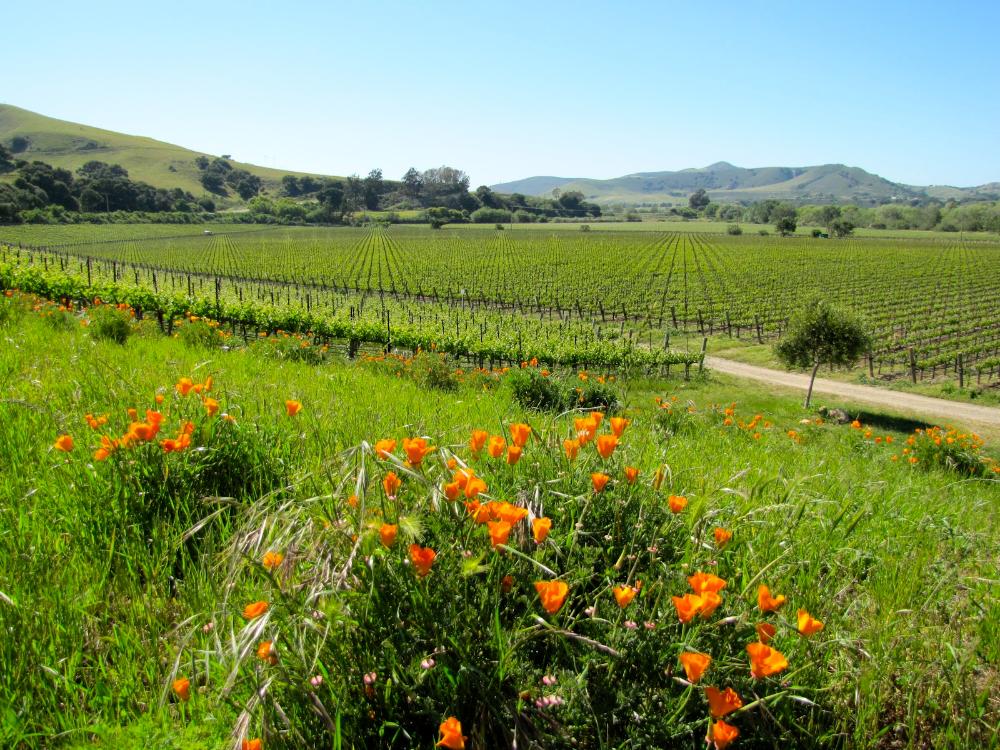 Santa Barbara, California Wine Country Bike Tours