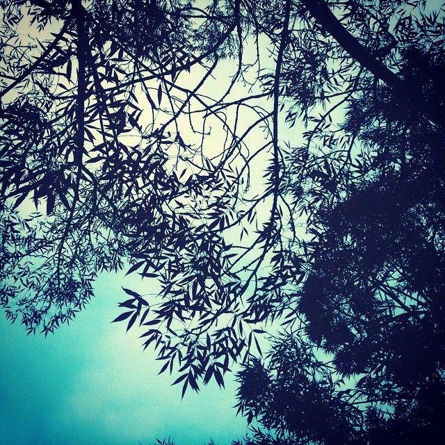 """#sheffield #trees"""