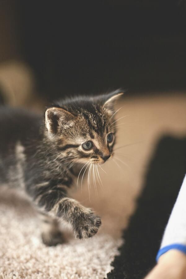 Emergency Kittens On Cute Little Animals Funny Cute Cats