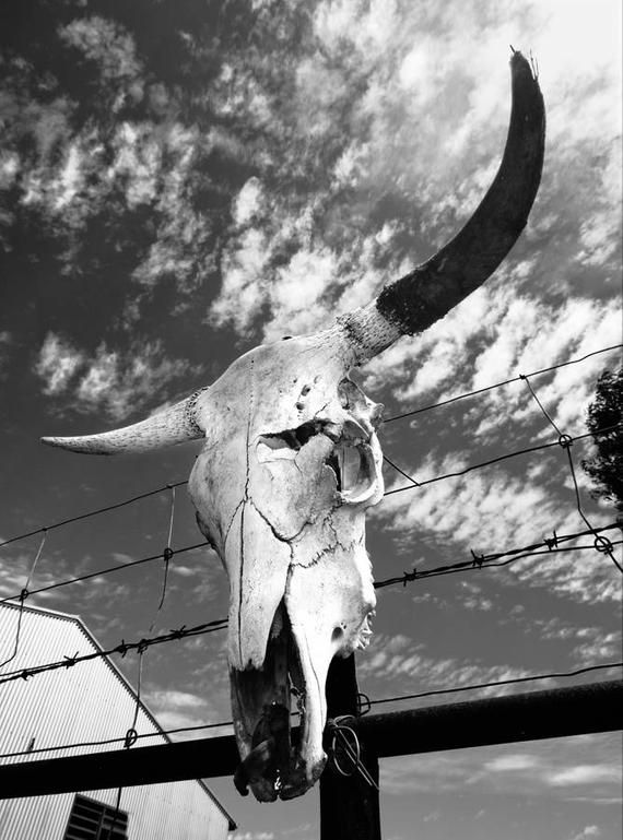 Limited Edition Black and White  Bull Skull photograph print photography wall art boho interior bohemian hipster cinematic desert picture.