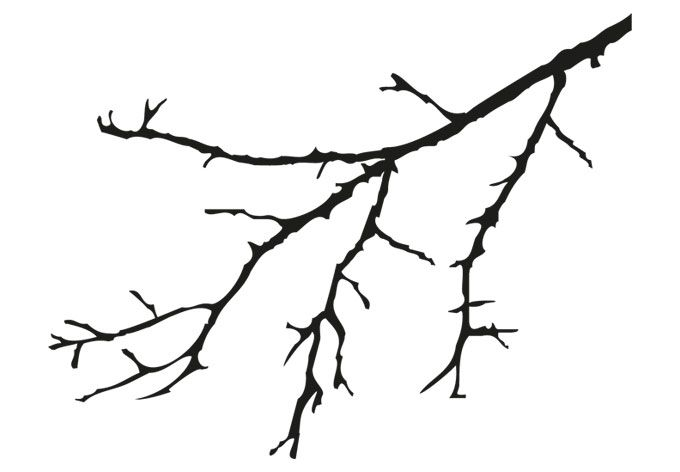кино картинка веточка дерева без листьев почему