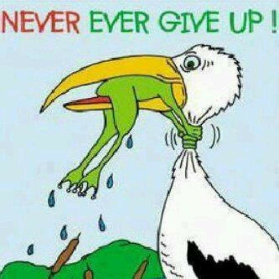 Don't ever give up Funny quotes, Funny pictures