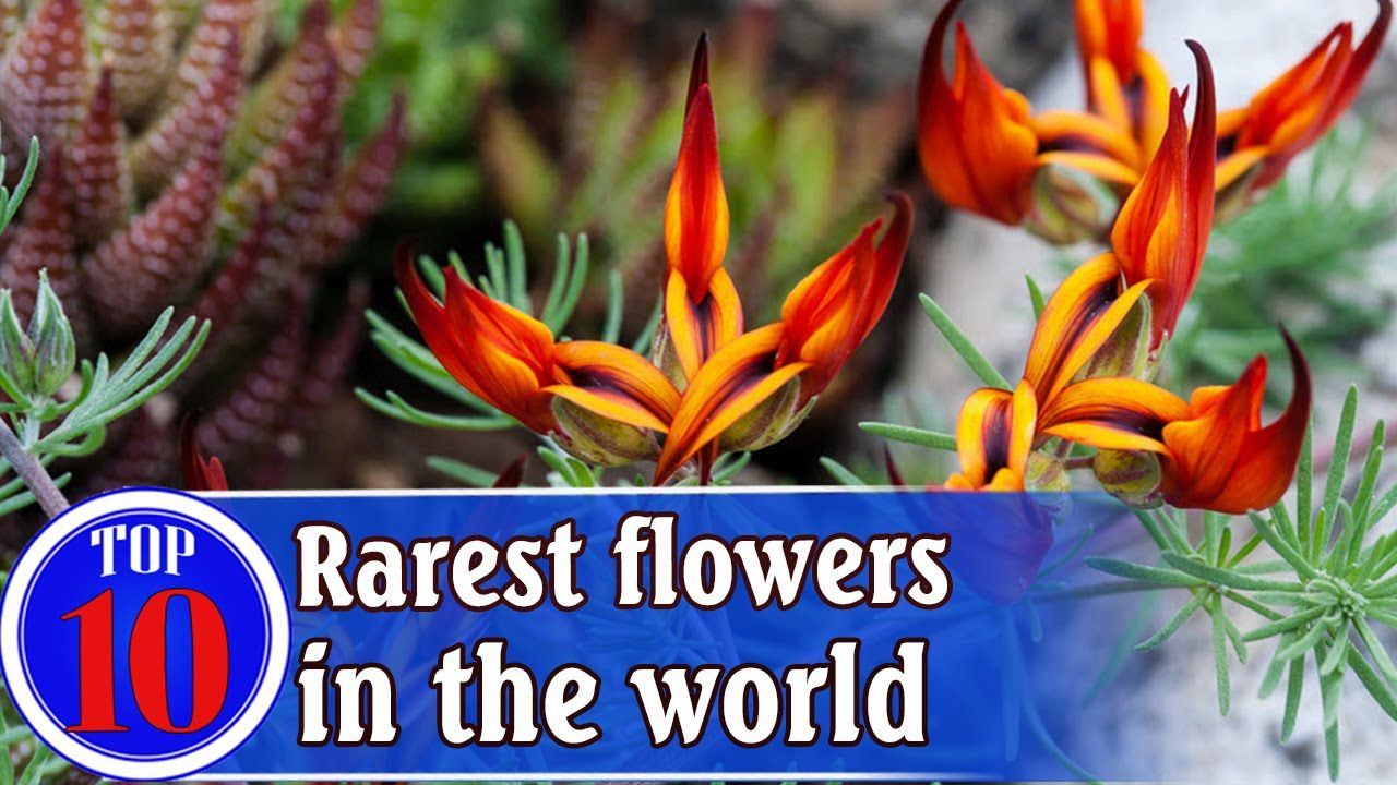 Top 10 Most Beautiful And Rarest Flowers In The World Most