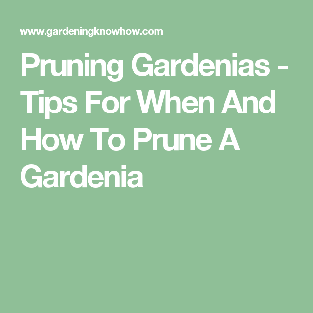 Pruning Gardenias Tips For When And How To Prune A Gardenia Pruning Japanese Maples Japanese Maple Prune