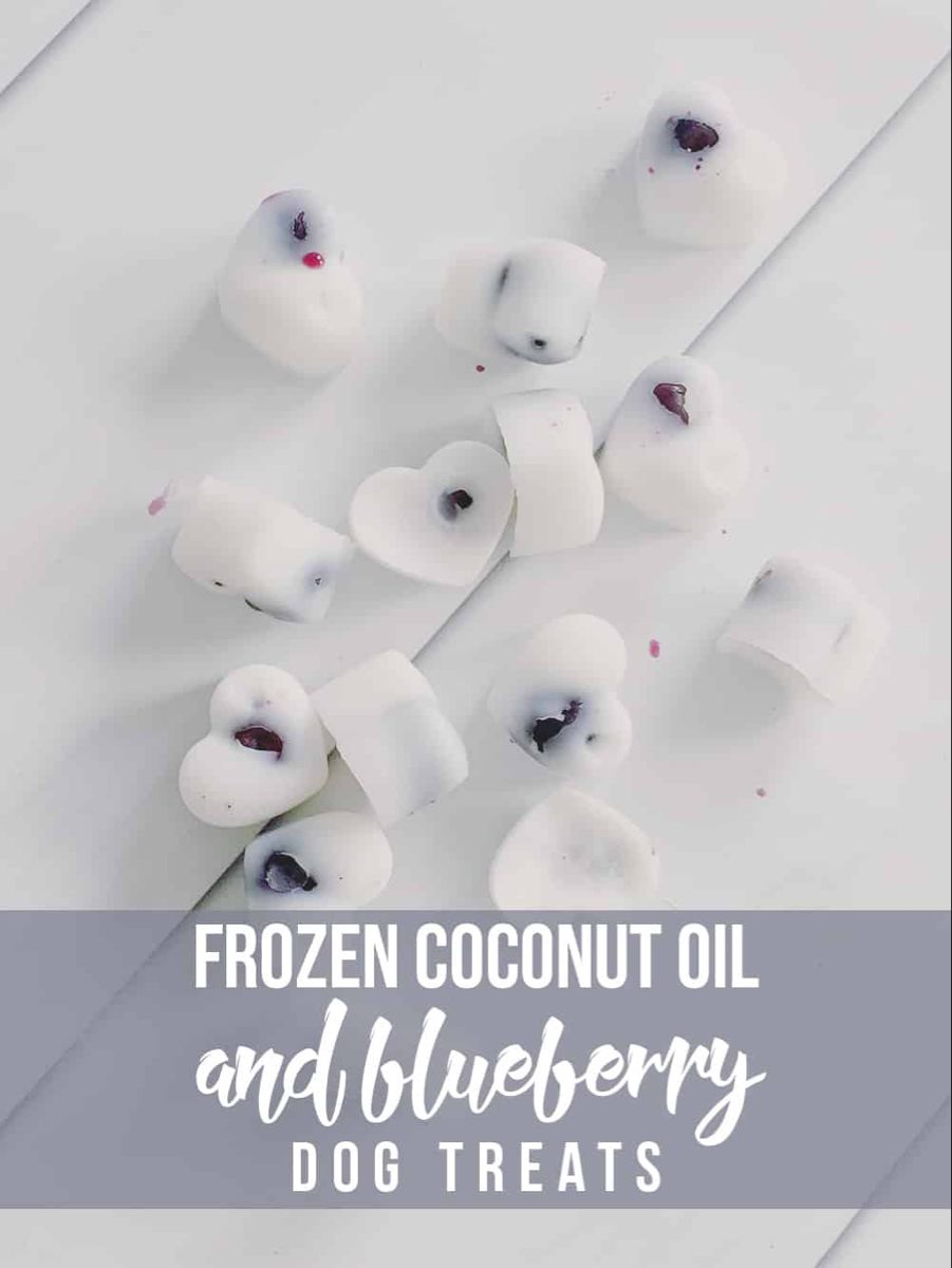 Frozen blueberry coconut oil dog treats recipe with