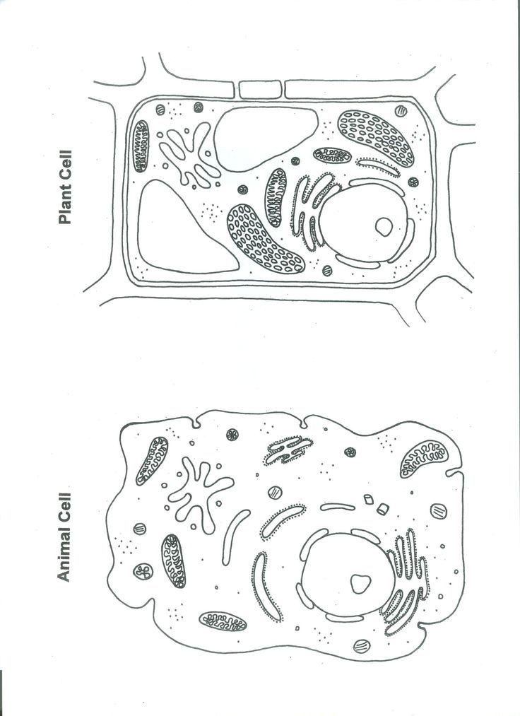 Plant Cell Animal Cell Coloring Page With Images Plant And